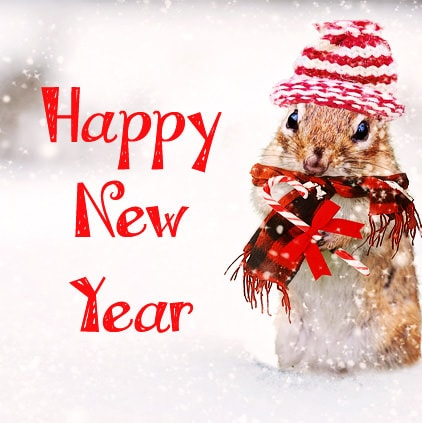 1582 cute funny happy new year photo facebook whatsapp status new year wishes
