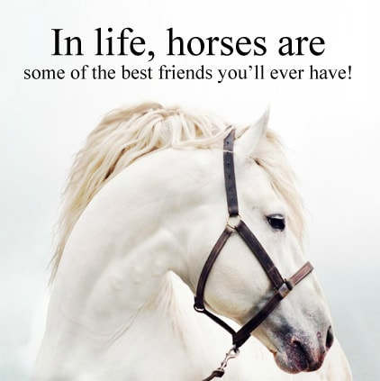 , 3795-Horse-Quotes-Images-For-Whatsapp-Facebook-Whatsapp-Status, horse quotes images for whatsapp facebook whatsapp status
